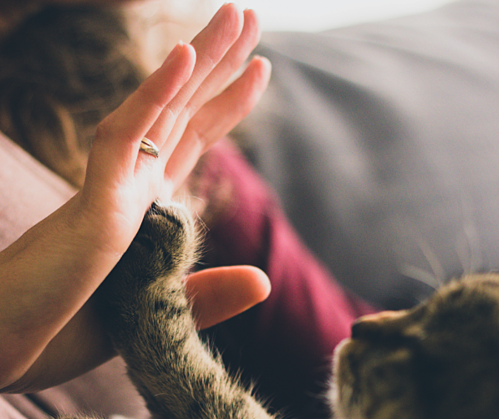 Cat and person high 5