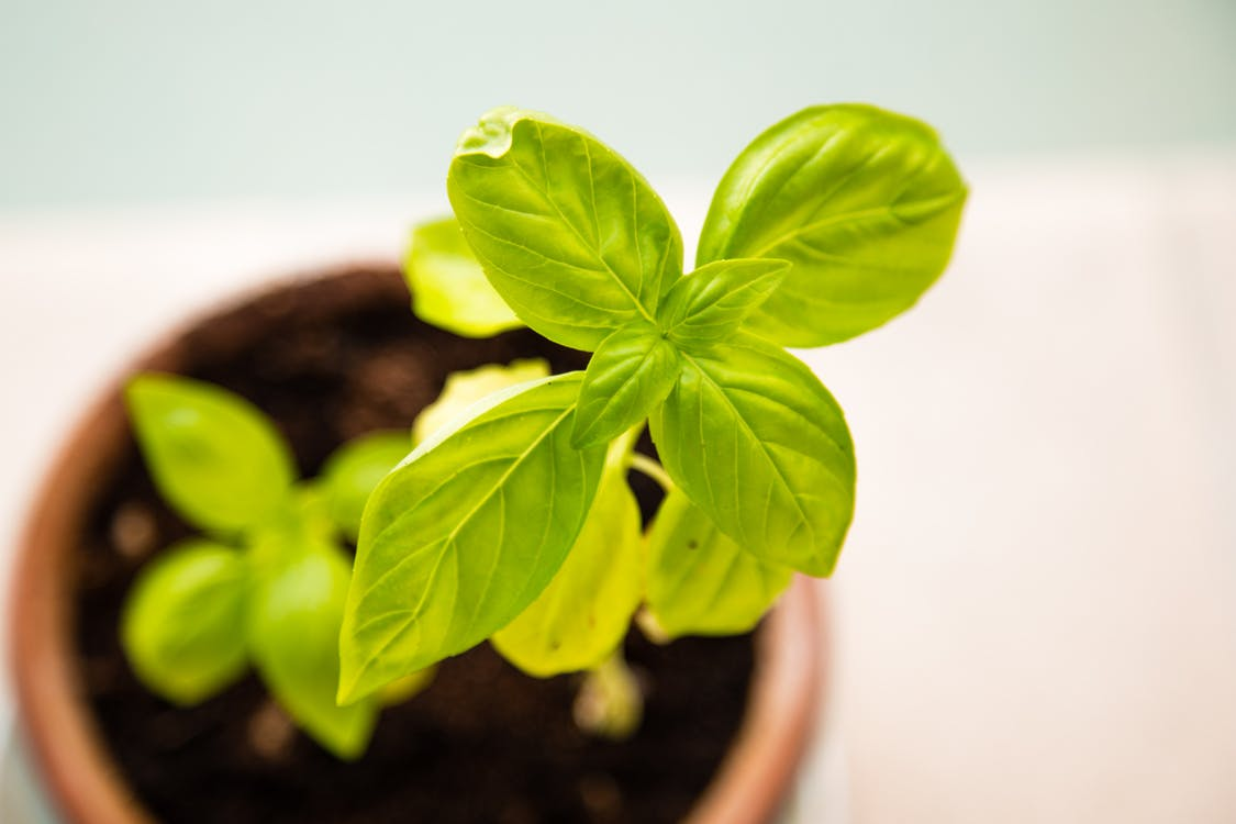 Plant growing representing nurturing course delegates